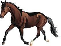 Лошадь вектора идущая иллюстрация вектора