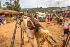 Лошадь вытягивая тележку через улицу в Mizan Teferi, Эфиопии Стоковые Изображения RF