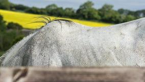 Лошадь вянет Стоковая Фотография RF