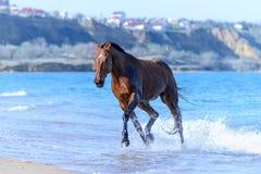Лошадь в воде Стоковое Изображение RF