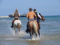 Лошадь в воде стоковые фото