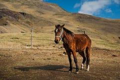 Лошадь в горах Ландшафты гор Стоковые Фотографии RF