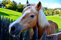Лошадь в деревне (ферма) Стоковое Изображение RF