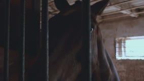 Лошадь в конце-вверх стойла сток-видео