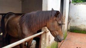 Лошадь в конюшне Стоковое Изображение