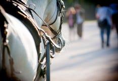 Лошадь в крупном плане проводки Стоковые Изображения
