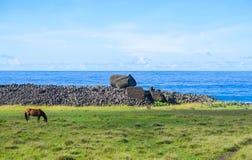Лошадь в острове пасхи, Чили Стоковое Фото