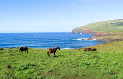 Лошадь в острове пасхи, Чили Стоковое Изображение RF