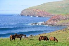 Лошадь в острове пасхи, Чили Стоковые Изображения
