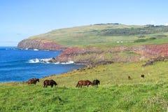 Лошадь в острове пасхи, Чили Стоковые Фотографии RF
