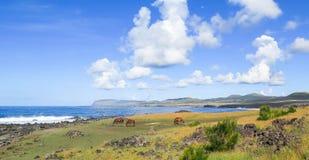 Лошадь в острове пасхи, Чили Стоковые Изображения RF