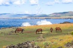Лошадь в острове пасхи, Чили Стоковые Фото