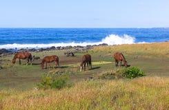 Лошадь в острове пасхи, Чили Стоковое Изображение