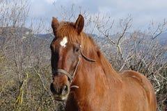 Лошадь в поле от Каталонии Стоковые Фото