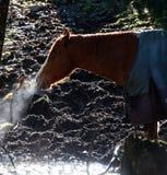 Лошадь в поле Стоковая Фотография