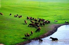 Лошадь в прерии Стоковые Фото