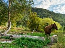 Лошадь в природе Стоковая Фотография RF