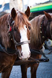 Лошадь в проводке Стоковое Фото
