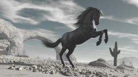 Лошадь в пустыне Стоковое фото RF