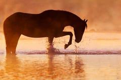 Лошадь в реке стоковые изображения