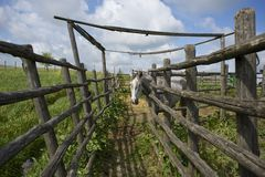 Лошадь в римской сельской местности Стоковое Изображение
