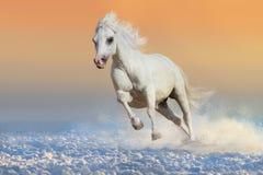Лошадь в снежке стоковое изображение rf