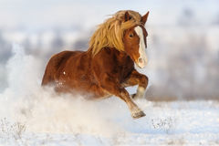 Лошадь в снежке стоковое изображение