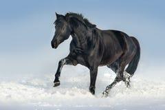 Лошадь в снежке стоковое фото rf