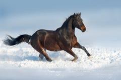 Лошадь в снежке стоковое фото