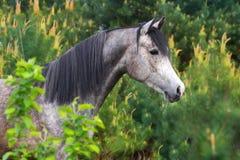 Лошадь в сосне Стоковое Фото