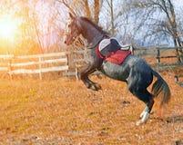 Лошадь в стойках проводки Стоковое фото RF