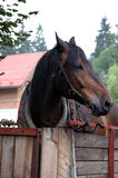 Лошадь в стойле Стоковая Фотография RF