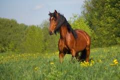 Лошадь в табуне Стоковая Фотография