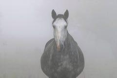 Лошадь в тумане Стоковые Изображения