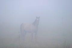Лошадь в тумане Стоковое Изображение RF