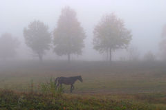 Лошадь в тумане Стоковое Фото