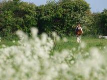 Лошадь в цветках Стоковое Изображение RF