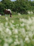Лошадь в цветках Стоковые Фотографии RF