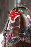 Лошадь в шляпе Стоковая Фотография