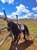 Лошадь в corral стоковое изображение rf
