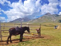 Лошадь в corral Стоковое Изображение