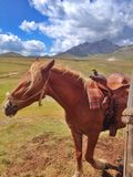 Лошадь в corral стоковое фото rf
