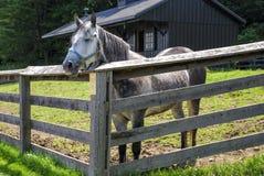 Лошадь в corral Стоковое Фото