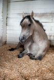 Лошадь в paddock стоковое изображение