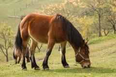 Лошадь горы стоковые фото