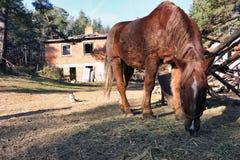 Лошадь горы Стоковые Изображения