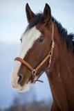 Лошадь графства в зиме Стоковые Фото