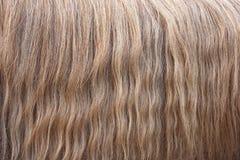 Лошадь гривы волнистых волос Текстура, предпосылка Стоковые Фотографии RF