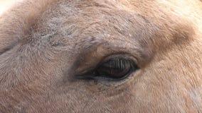 Лошадь глаза сток-видео