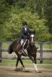 Лошадь девушки и краски скача галопом Стоковое Фото